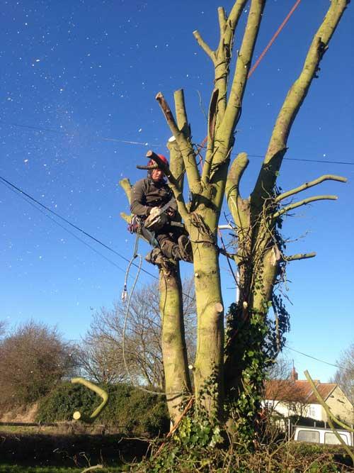 Fully Insured Tree Surgeon