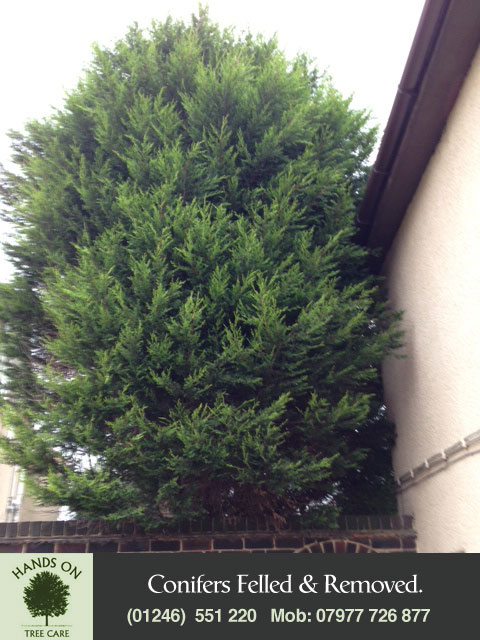Tree Felling Chesterfield