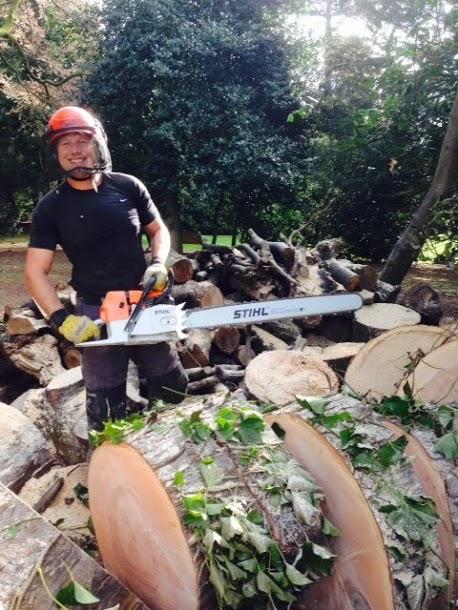 Tree surgeons sheffield - Cutting a Fallen Tree