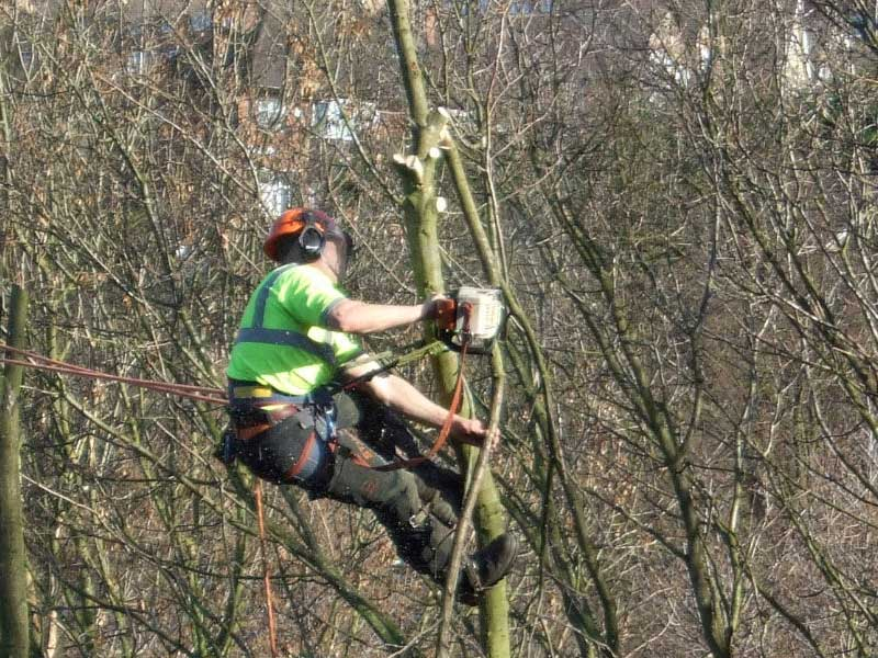 Call us about Tree felling