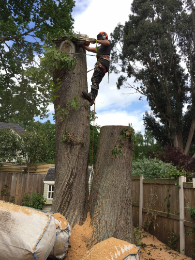 Cutting Down the Tree Trunks