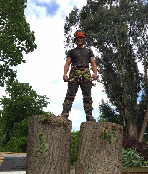 Sweet Chestnut Trees Cut Down